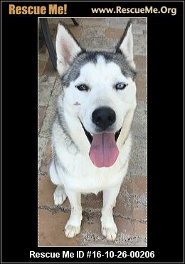 Texas Siberian Husky Rescue ― Adoptions ― Rescueme Org