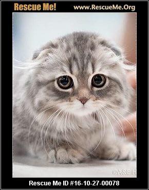 mr rogers cat
