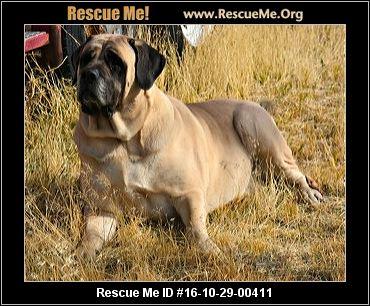 Nevada Dog Rescue ― Adoptions ― Rescueme Org