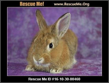 North Carolina Rabbit Rescue ― Adoptions ― Rescueme Org