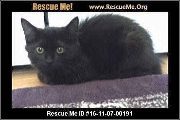 Cat Rescue Middlesex