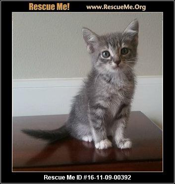 Pinellas County Cat Adoption