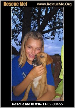 Senior Dog Rescue Sarasota