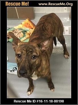 Tails Of Hope Dog Rescue Highland Park Il