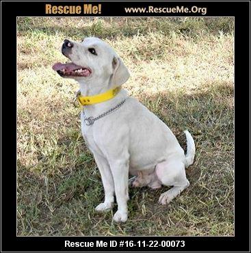 Florida Beagle Rescue ― Adoptions ― Rescueme Org