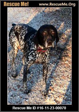 Terrier Way New Smyrna Beach Fl