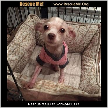 Sheree S Dog Rescue Application