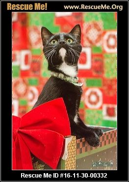 Georgia Cat Rescue ― Adoptions ― Rescueme Org