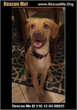 Texas Golden Retriever Rescue ― Adoptions ― Rescueme Org