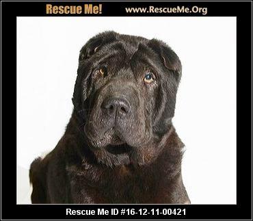 Missouri shar pei rescue adoptions rescueme org for Shar pei puppies for sale craigslist