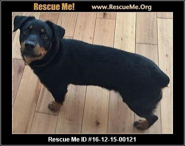 Rottweiler Blog Rescuemeorg