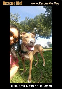 California Lab Rescue ― Adoptions ― Rescueme Org