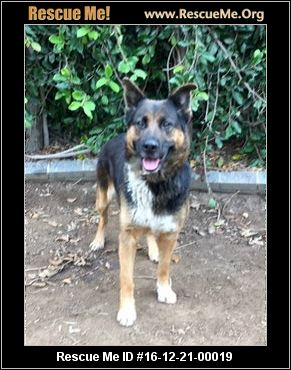 Central Coast Cattle Dog Rescue