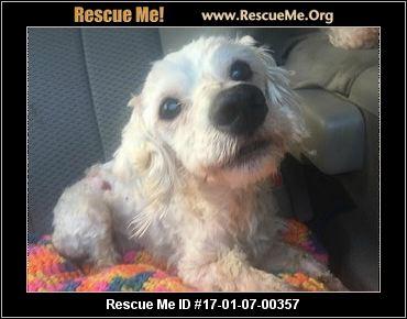Poodle rescue va