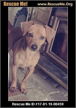 Haven Dog Rescue Roseville Ca