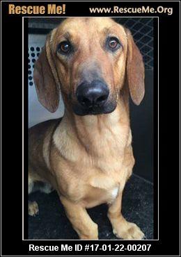 Rescue Dogs Concord Ca