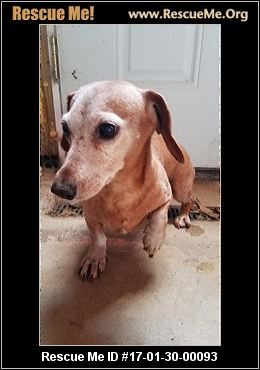 Deaf Dog Rescue Pennsylvania