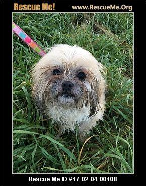 Anza Ca Dog Rescue