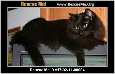 Rescue Dogs Coral Springs