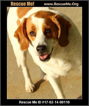 Image Result For Beagle Rescue Indiana