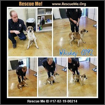 Street Savvy Dog Rescue Facebook