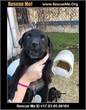 Arkansas Dog Adoptions