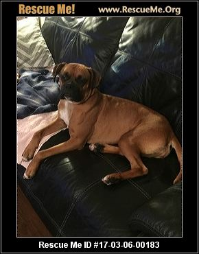 Boxer Rescue In Palm Beach County