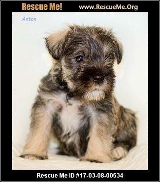 Dog Rescue Northumberland Pa