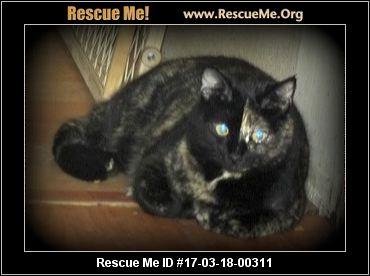 Maine Coon Cat Rescue Missouri