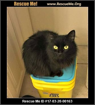 Genesee County Cat Rescue