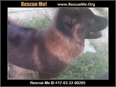 Chow Chow ► RESCUE ALERT ◀ - Rescue Me! Chow Chow Rescue