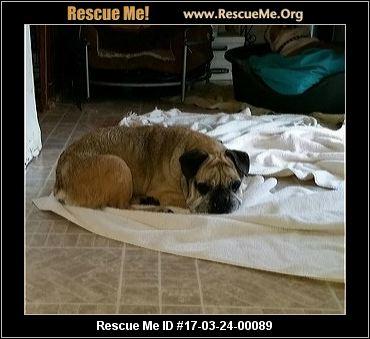 New York Dog Rescue ― Adoptions ― Rescueme Org