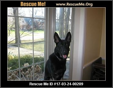 German shepherd rescue fort wayne indiana