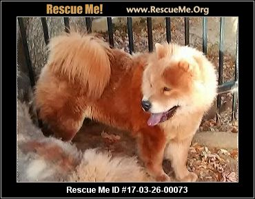 Chow Chow ► RESCUE ALERT ◀
