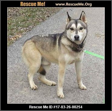 Pennsylvania Siberian Husky Rescue Groups Autos Post
