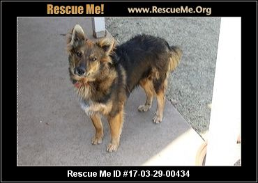 German shepherd rescue albuquerque