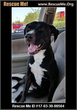 Boston terrier rescue me