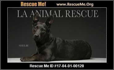 Cat Rescue Chatsworth Ca