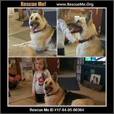 Lake County Dog Adoption Illinois
