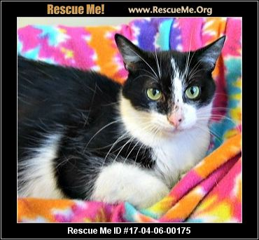 Indiana Cat Rescue ― Adoptions ― Rescueme Org