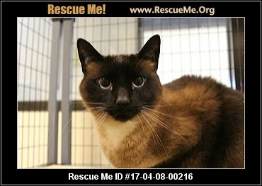 Georgia Cat Rescue ― Adoptions ― Rescueme Org