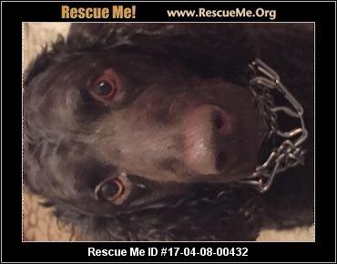 Iowa Dog Rescue ― Adoptions ― Rescueme Org