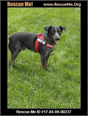 Heeling Heelers Hearts Dog Rescue