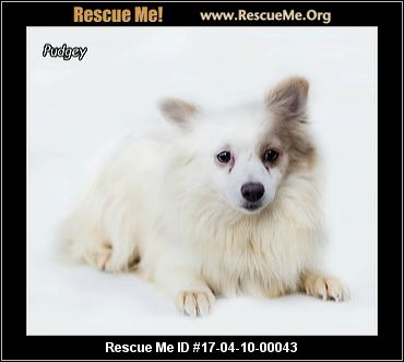 Dog Rescue Northumberland Pa