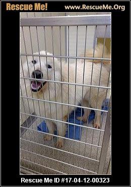 Dog Adoption Berkshire County Ma