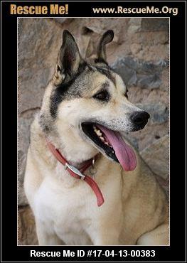 Santa Clara Dog Rescue
