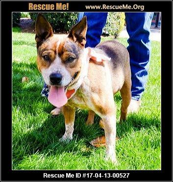 North Carolina Australian Cattle Dog Rescue ― Adoptions