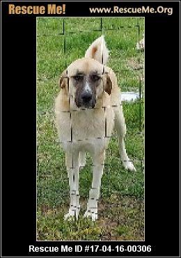 Kentucky Dog Rescue ― Adoptions ― Rescueme Org
