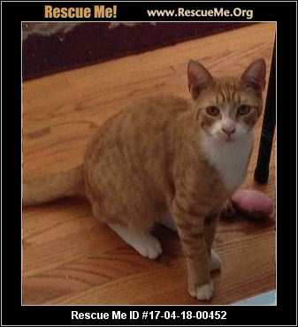 Cat Rescue Westchester County