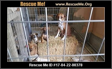 Salty Dog Rescue Md